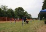 HVES-Hunderennen 2015 (869)